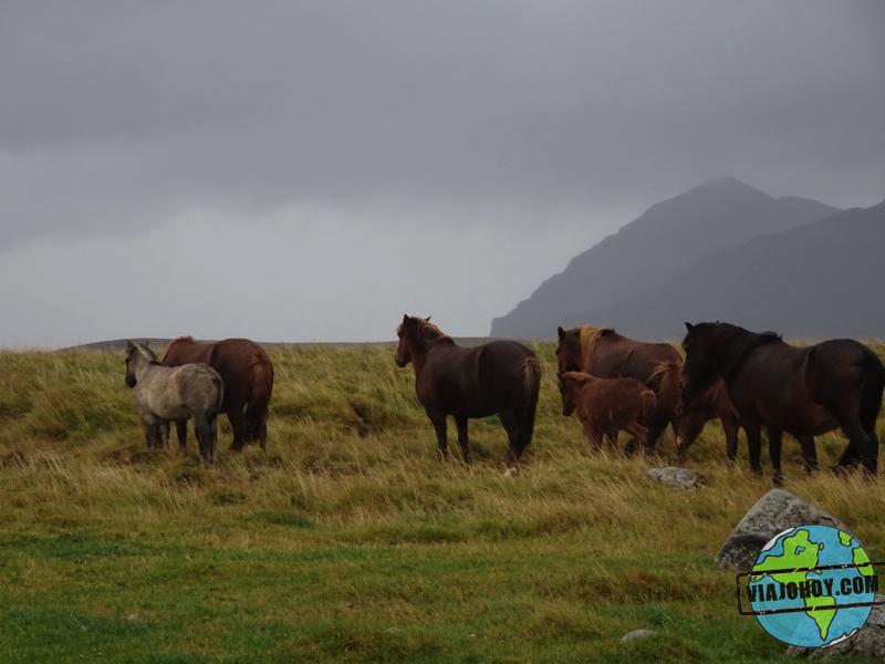 caballos--Islandia-viajohoy2 copy 7 Cosas que no sabias de Islandia ¿o si?