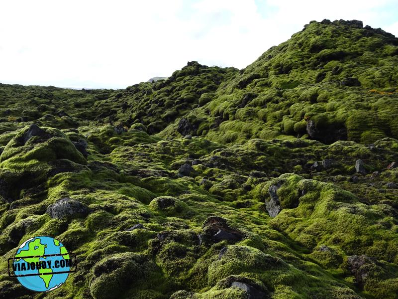 pradera-liquenes-islandia-viajohoy6 Mas de 10 razones por la que deberias visitar Islandia