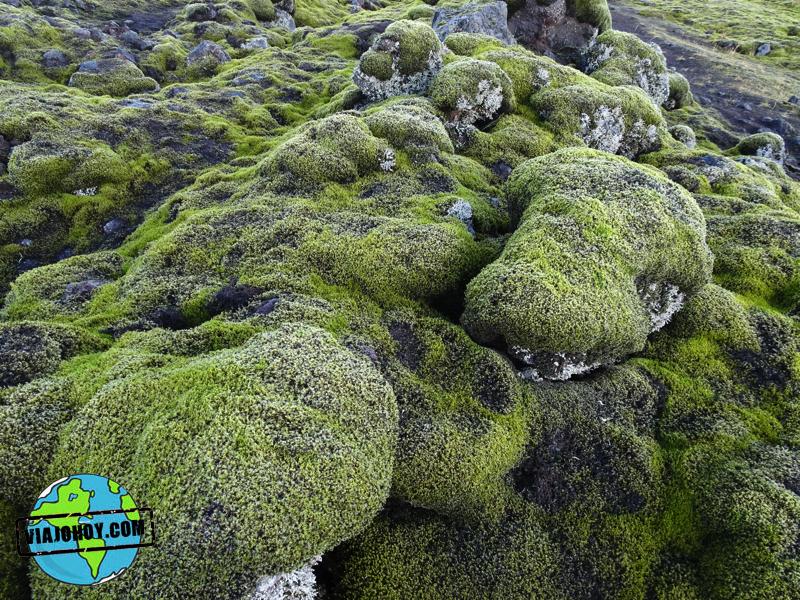 pradera-liquenes-islandia-viajohoy9 7 Cosas que no sabias de Islandia ¿o si?