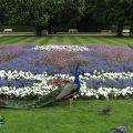 parque-lazienki-varsovia-viajohoy64 Parque Lazienki – Visita Varsovia