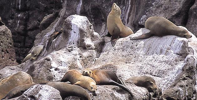 San-Pedro-Nolasco-Island 10 paradisíacas islas y rincones en México que te invitan a soñar