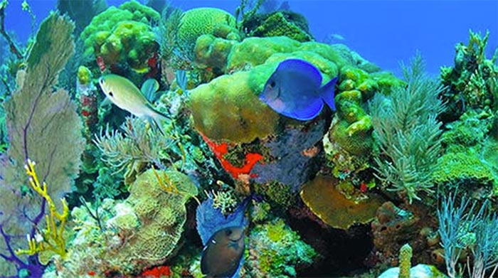 isla-guam-snorkell Bahía Tumón en Isla Guam – Paraíso Tropical
