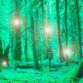 irlanda-mistica Elfos, duendes y Hadas de Irlanda